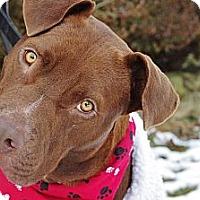 Adopt A Pet :: Martin - Reisterstown, MD