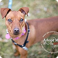 Adopt A Pet :: Layla - Myersville, MD