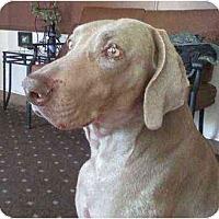 Adopt A Pet :: Rufus - Eustis, FL