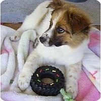 Adopt A Pet :: Sedona - Phoenix, AZ
