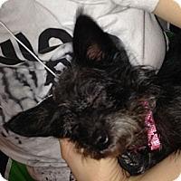 Adopt A Pet :: Perris - Orange, CA