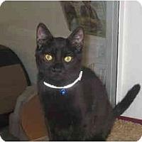 Adopt A Pet :: BLACK PEARL - El Cajon, CA
