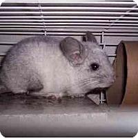 Adopt A Pet :: Rico - Avondale, LA