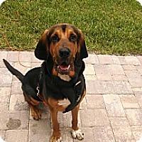 Adopt A Pet :: Otis - St, Augustine, FL