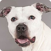 Adopt A Pet :: Coco - Chicago, IL