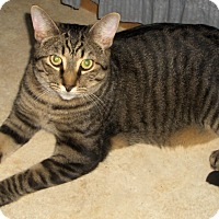 Adopt A Pet :: Wyatt - Richmond, VA