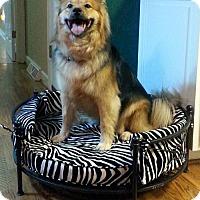 Adopt A Pet :: Makena(CL) - Greensboro, NC