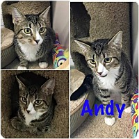 Adopt A Pet :: Andy - Land O Lakes, FL