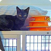 Adopt A Pet :: Lorrie - Victor, NY