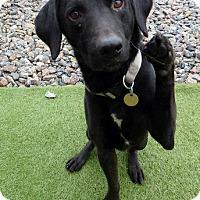 Adopt A Pet :: Cole - Midlothian, VA