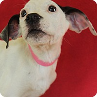 Adopt A Pet :: Windy - Waldorf, MD