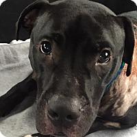 Adopt A Pet :: Dan Daly - Dayton, OH