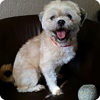 Adopt A Pet :: Miller Ranger - Urbana, OH