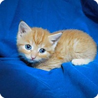Adopt A Pet :: Remus-052014j - Tupelo, MS