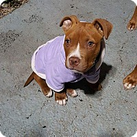 Adopt A Pet :: Makeddah - West Allis, WI