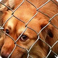 Adopt A Pet :: Webster - Oswego, IL
