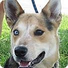 Adopt A Pet :: Yukon