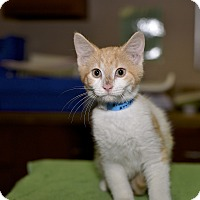 Adopt A Pet :: Pizza - Medina, OH