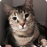Adopt A Pet :: Macey - Council Bluffs, IA