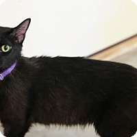 Adopt A Pet :: Matilda - Boise, ID
