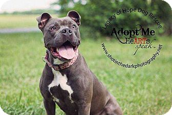 Pit Bull Terrier Mix Dog for adoption in Broken Arrow, Oklahoma - Bubbles