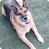 Adopt A Pet :: Lucky - Reno, NV