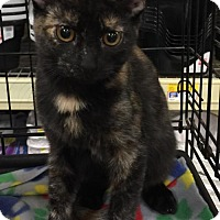 Adopt A Pet :: Charm - Oviedo, FL