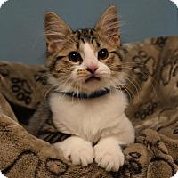 Adopt A Pet :: Spencer - Cincinnati, OH