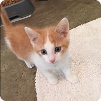 Adopt A Pet :: Timone - Ashland, OH