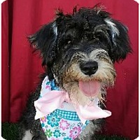 Adopt A Pet :: STELLA - Irvine, CA