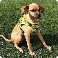 Adopt A Pet :: Reese - Mesa, AZ