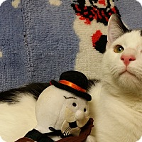 Adopt A Pet :: Flurry & whiff - Berlin, CT