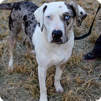 Adopt A Pet :: Chris - Mississauga, ON