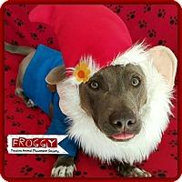 Adopt A Pet :: Froggy - Yucaipa, CA