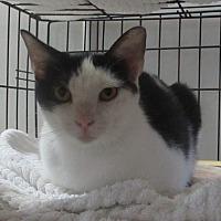 Adopt A Pet :: Peppermint Patty - Jackson, MO