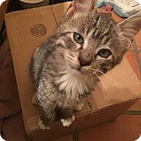 Adopt A Pet :: Fred - Tucson, AZ
