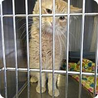 Adopt A Pet :: Zak - Sauk Rapids, MN