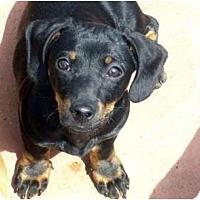 Adopt A Pet :: Emma - San Jose, CA