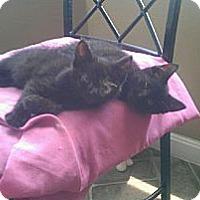 Adopt A Pet :: Martin & Maxine - Xenia, OH