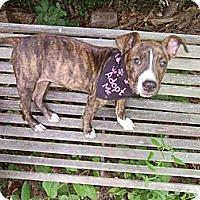 Adopt A Pet :: Tinkerbelle - Newtown, CT