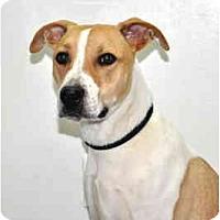 Adopt A Pet :: Cosmo - Port Washington, NY