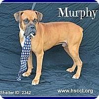 Adopt A Pet :: Murphy - Plano, TX