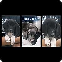 Adopt A Pet :: Turk - Cumming, GA