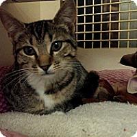 Adopt A Pet :: Dalilah - Stafford, VA