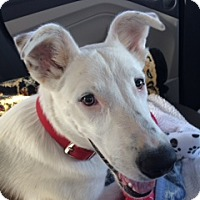Adopt A Pet :: Dex - Scottsdale, AZ