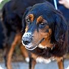 Adopt A Pet :: Charlize