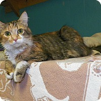 Adopt A Pet :: Rainbow - Dover, OH