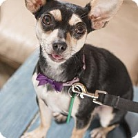 Adopt A Pet :: Belle - Brookfield, WI