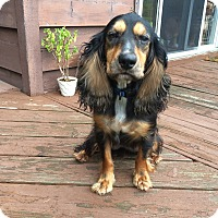 Adopt A Pet :: Jax 4yr Adopted - Mentor, OH
