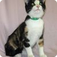 Adopt A Pet :: Willow - Powell, OH